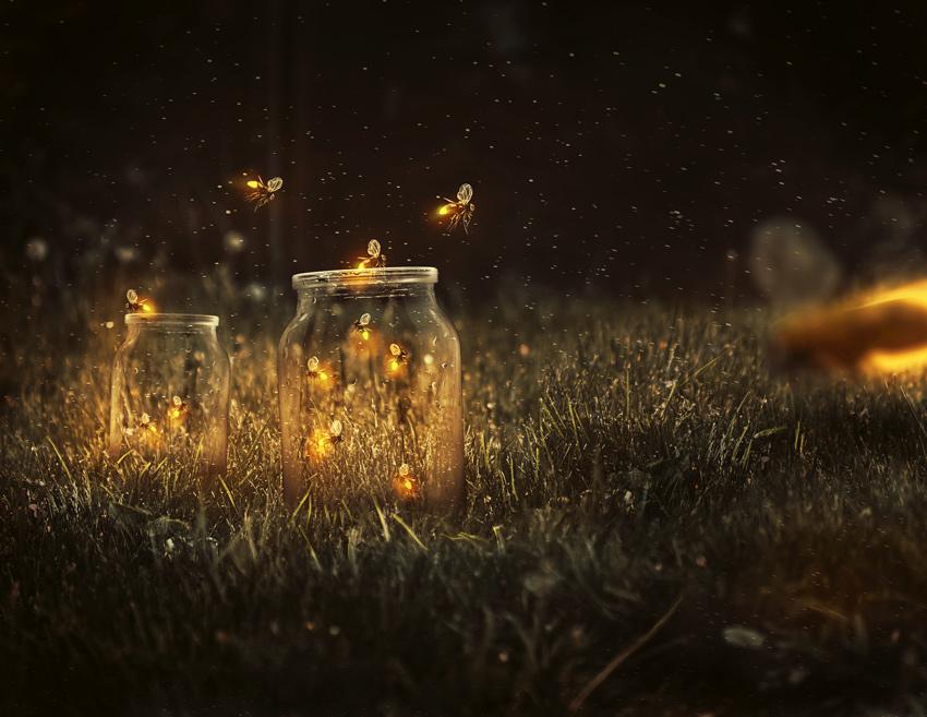 fireflies_final.jpg